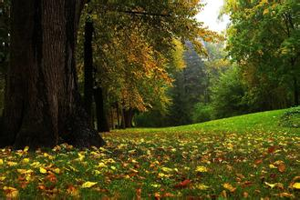 秋冬季,治疗牛皮癣要注意